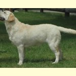 Integrity Farm Labrador Retriever - Integritys Gina